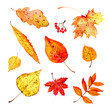 Set of different colorful autumn leaves. Hand drawn watercolor stylized sketch illustration