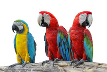 Macaw Red And Yellow Or Parrot...