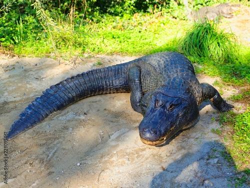 Spoed Foto op Canvas Krokodil Krokodil