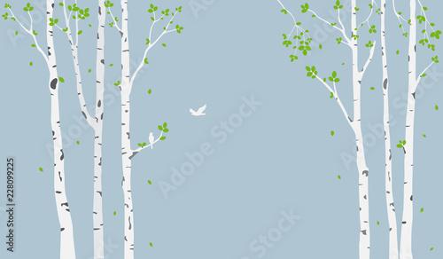 Fototapeta Beautiful tree branch with birds silhouette background for wallpaper sticker obraz