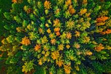 Baumkronen Im Herbst Aus Der L...