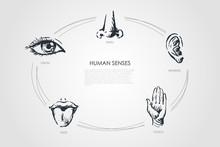 Human Senses - Vision, Taste, ...