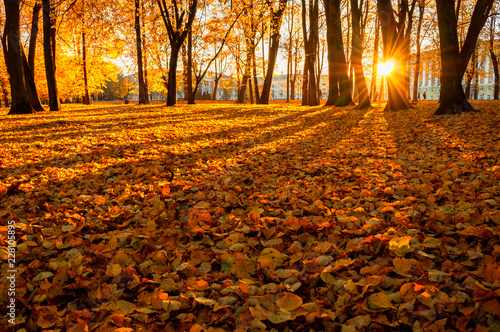 Foto op Canvas Baksteen Autumn trees in sunny autumn park lit by sunshine - sunny autumn landscape in bright evening sunlight