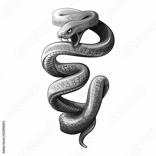 Photo snake vector draw