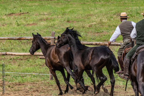 Fotografía  Wild horses galloping wildly in a rodeo show