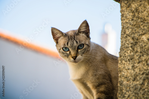 Fotografía Curious cat