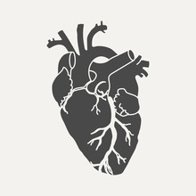Anatomical Human Heart - Dark Silhouette Isolated On White Background. Hand Drawn Sketch. Vector Illustration.