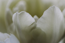 Close Up Of White Flowers Bloo...