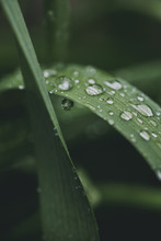 Close Up Of Wet Blades Of Grass