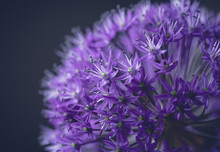 Close-up Of Purple Flowers Gro...