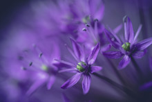 Close Up Of Purple Flowers Gro...