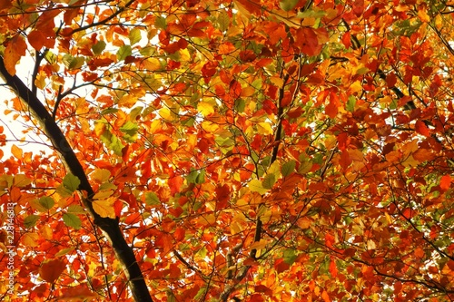 A close-up image of colourful Autumn leaves.