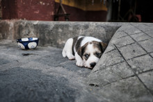 High Angle View Of Cute Puppy Looking Away While Lying On Footpath