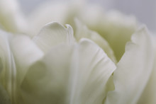 Close-up Of Fresh White Flowers