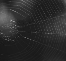 Close-up Of Spider Web Over Bl...