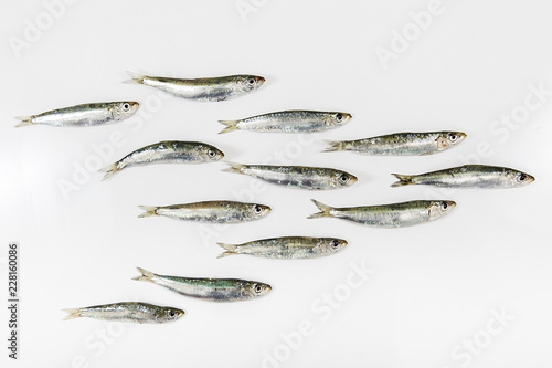 Vászonkép  taze balık