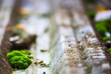Moss On Corrugated Metal Surface Is Macro, Soft Focus