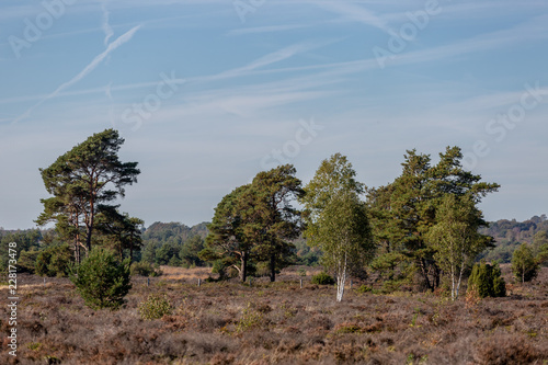 Moorland landscape with vegetation such as the birch and pine trees in the foreground