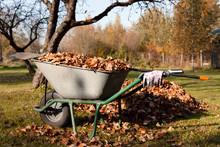 Autumn Leaves In A Wheelbarrow...