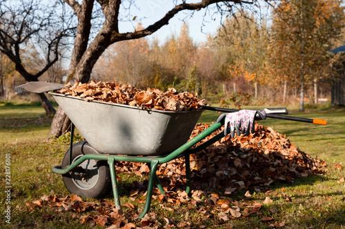 Cuadros en Lienzo Autumn leaves in a wheelbarrow with a rake and gloves on a sunny day in autumn