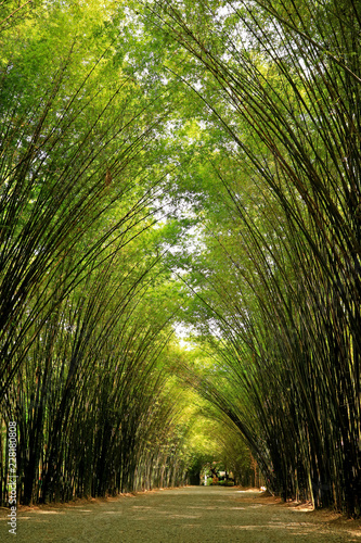 Natural Bamboo Tree Arch over the Walkway to the Entrance of Chulapornwanaram Temple in Nakornnayok Province, Thailand