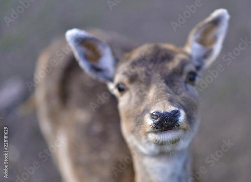 Deurstickers Hert Deer in public park during autumn season at a sunny day