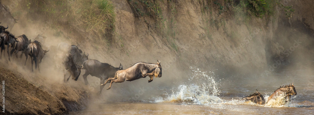 Fototapeta Wildebeests are crossing  Mara river. Great Migration. Kenya. Tanzania. Maasai Mara National Park.