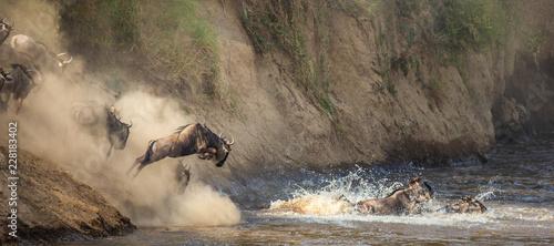 Photo  Wildebeests are crossing  Mara river