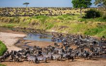 Big Herd Of Wildebeest In The ...