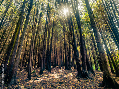 Fotografie, Obraz  Trees in Forest