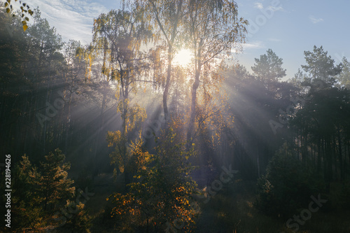 Fotografie, Obraz  Warm autumn landscape  with sun rays