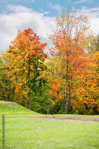 Aluminium Prints Autumn Landscape with colorful autumn trees