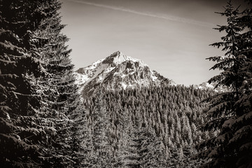Obraz na Szkle Czarno-Biały View on winter mountains with forest. Image in black and white color style.