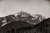 Widok na zimowe góry z lasem. Obraz w czarno-białym kolorze. - 228205663