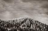 Widok na zimowe góry z lasem. Obraz w czarno-białym kolorze - 228205888