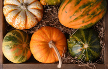 Overhaed Closeup Of A Variety Of Decorative Gourds And Pumpkins