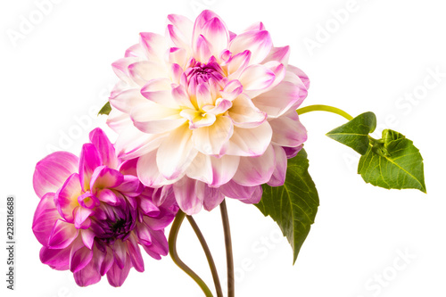 Spoed Foto op Canvas Dahlia Beautiful colorful arrangement dahlia flowers isolated on a white background