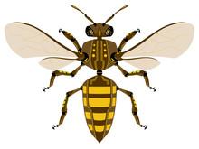 Robotic Bee | Illustration