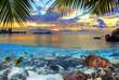 BEACH AND NATURE