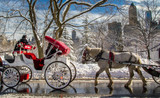 Fototapeta Nowy Jork - Carriage horses walk past on a snowy day in Central Park