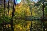 Fototapeta Krajobraz - rezerwat przyrody Las Warmiński