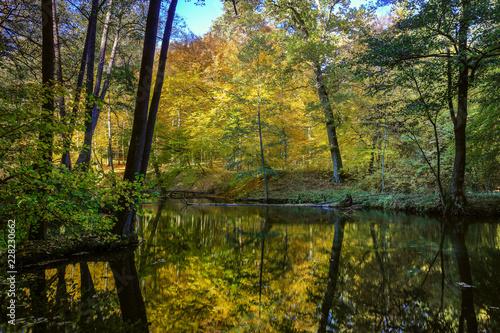 rezerwat przyrody Las Warmiński - fototapety na wymiar