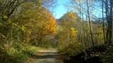 lasy, jesień,bieszczady,góry,bory,