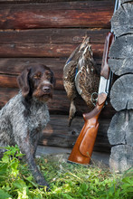 Dog And Hunting Trophy Near The Hunting Lodge