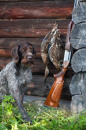 Autocollant pour porte Chasse dog and hunting trophy near the hunting lodge