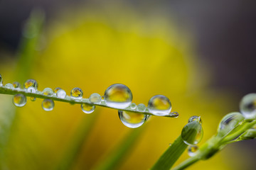 water drops from nature