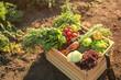 Leinwandbild Motiv Wooden box with different vegetables in field