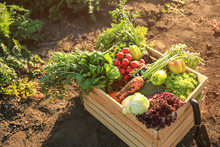 Wooden Box With Different Vegetables In Field