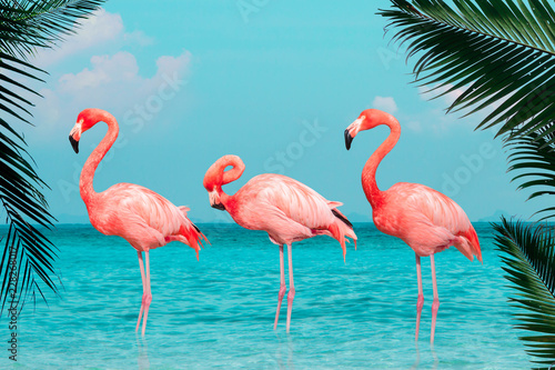 Poster de jardin Flamingo Vintage and retro collage photo of flamingos standing in clear blue sea with sunny sky with cloud and green coconut tree leaves in foreground.