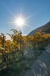 Pilgerweg entlang eines herbstlich gefärbten Weinbergs mit Sicht auf den See – Pilgerweg/Jakobsweg von Ligerz nach La Neuveville - Herbst in der Schweiz am Bielersee